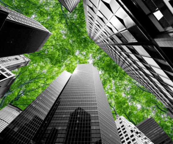 Buildings tree canopy